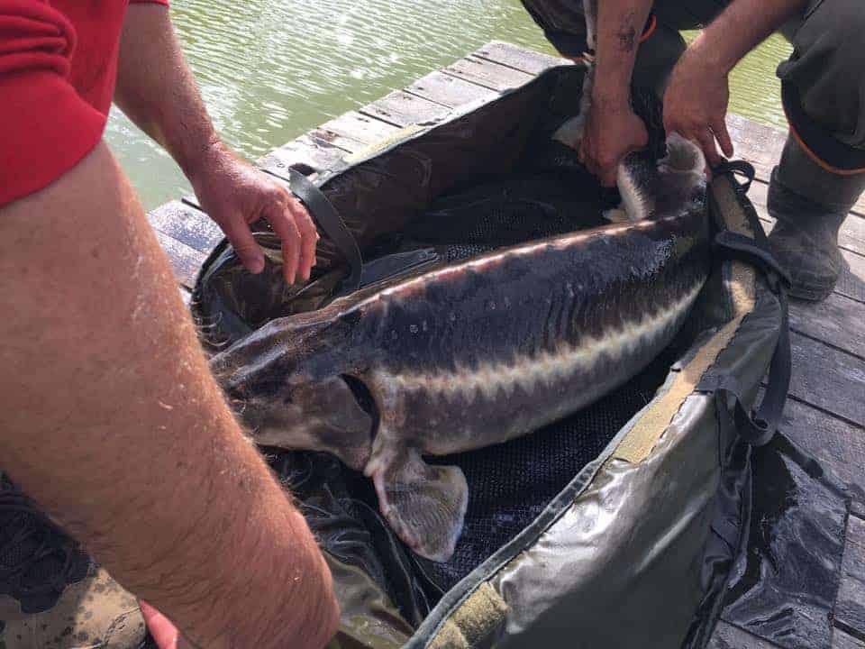 Ho Ho Horgásztó