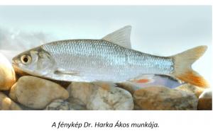 jászkeszeg horgász tilalmi idők