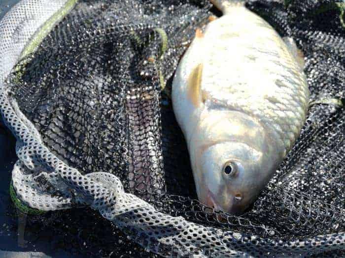 leánykoncér horgászata