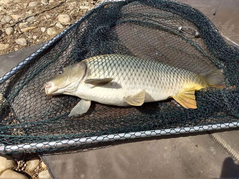 pontyozó horgásztó