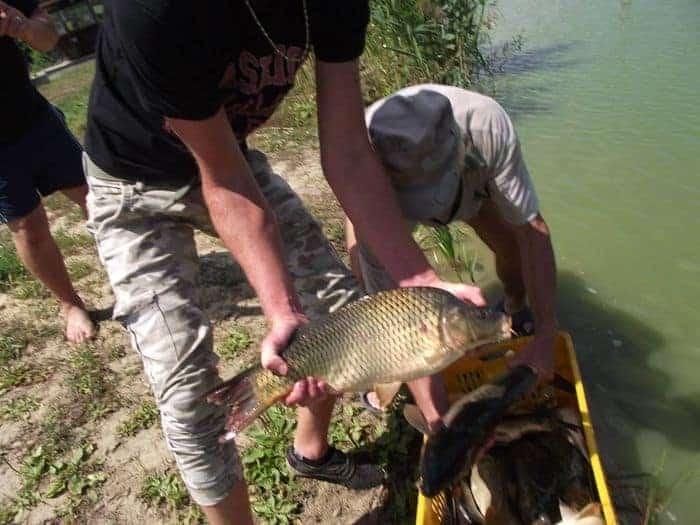 végegyházi horgásztó telepítés